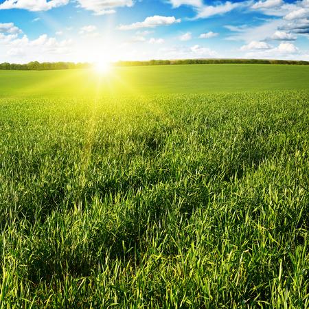 Prachtige zonsondergang op groen veld Stockfoto