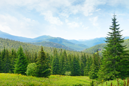 Beautiful pine trees on background high mountains. Imagens - 35120837