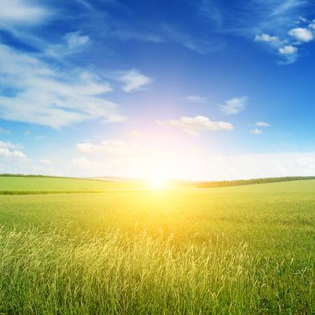 緑の草原に沈む夕日