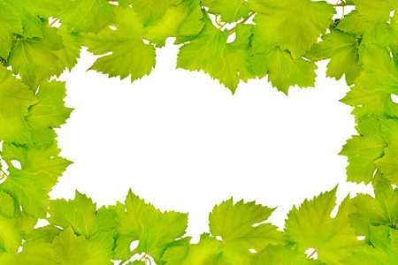 Border of fresh grape leaves isolated on white 스톡 콘텐츠