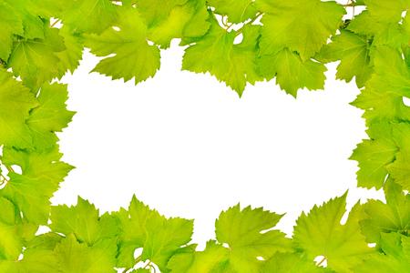 Border of fresh grape leaves isolated on white Foto de archivo