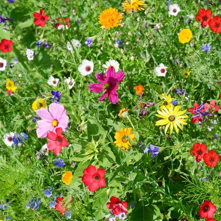 Flores silvestres en el prado verde Foto de archivo - 45051745
