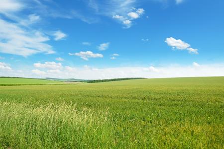 lente weide en de blauwe hemel Stockfoto