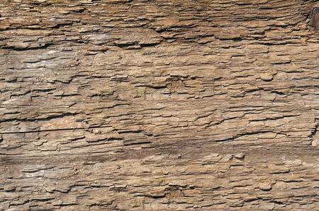 schors oude boom. houtstructuur Stockfoto