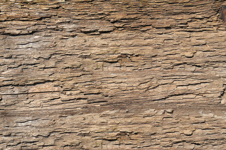 bark old tree. wood texture Stockfoto