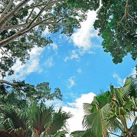 Contexte de branches d'arbres et le ciel