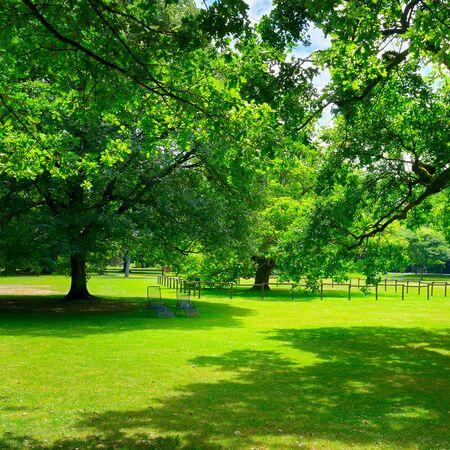 공원에서 아름 다운 초원 스톡 콘텐츠