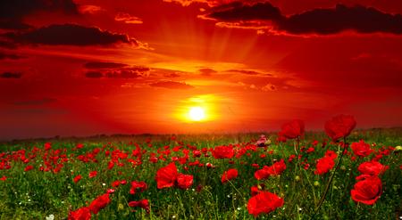 Bright sunrise in the poppy field Banco de Imagens - 56298264
