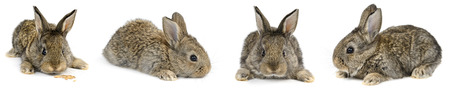 Collection young rabbit with different camera angles isolated on white background. Reklamní fotografie