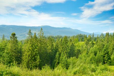 Krajobraz górski. Karpaty w jasny słoneczny dzień. Wolne miejsce na tekst.