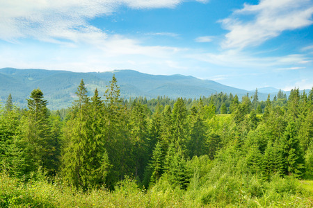 Mountain landscape. Carpathians on bright sunny day. Free space for text.