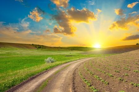 Empty countryside road through spring fields. Bright sunset in blue sky. Zdjęcie Seryjne