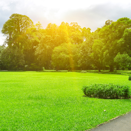 Picturesque summer park with large glade covered grass