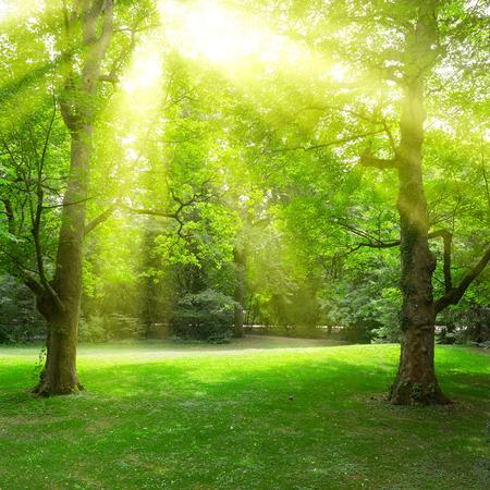 Sunlight through leaves trees in summer park.