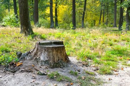 Souche d'arbre abattu dans la forêt avec de la mousse et de l'herbe verte autour.