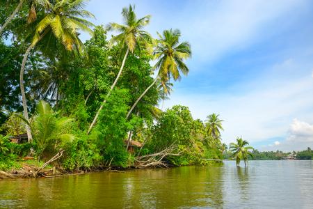 Jungle on shore tropical lake