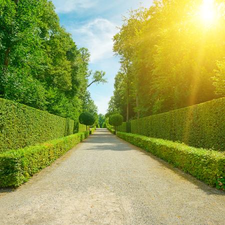 Bright summer sun illuminates the alley in the citys public park Zdjęcie Seryjne