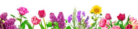 Panorama diferentes flores aisladas sobre fondo blanco.