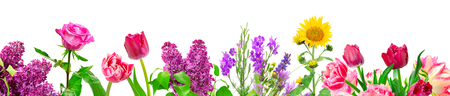 Panorama different flowers isolated on white background