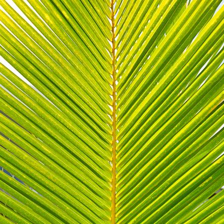 Coconut palm leaves. Floral pattern background