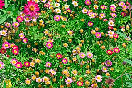 Background beautiful fresh summer flowers on flowerbed. Floral backdrop.