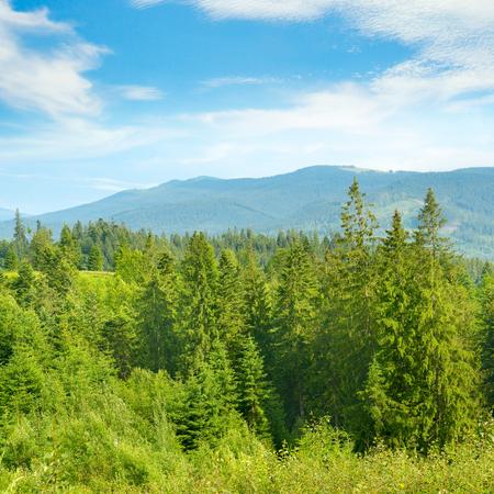 Paesaggio di montagna. Carpazi in giornata di sole. Spazio libero per il testo.