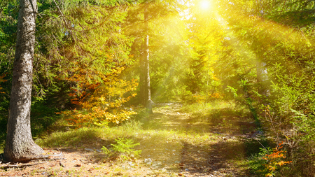 Sun rays illuminate beautiful autumn forest