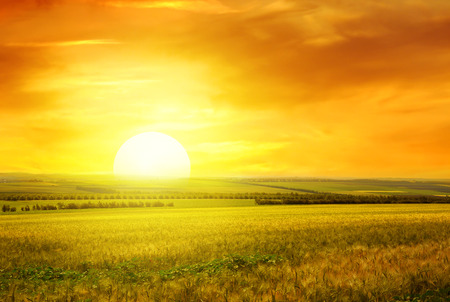 Golden sunset over wheat field Imagens