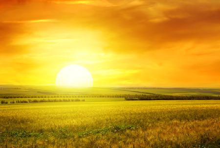 Puesta de sol dorada sobre campo de trigo Foto de archivo