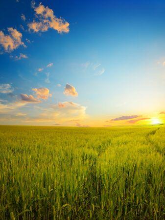 Bright epic dawn on wheat field. Reklamní fotografie - 135503291