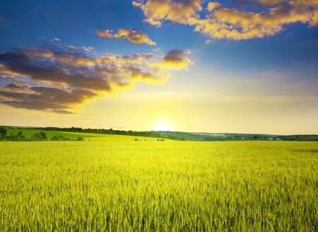 Majestic dawn and blue sky with clouds over ripe summer wheat field. Standard-Bild