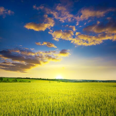 Majestic dawn and blue sky with clouds over ripe summer wheat field. Stock Photo