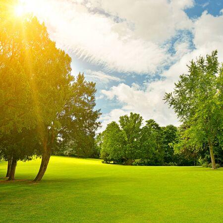 sunbeams in beautiful summer park
