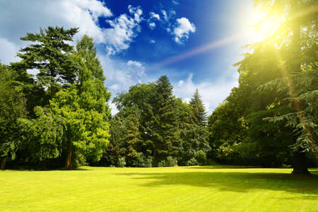 Bright sun over picturesque meadow in old park.
