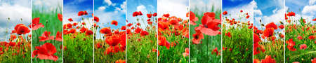 Collage bright juicy landscapes poppy field in spring.