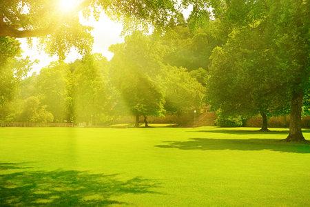 Sunrise beam in the beautiful summer park Foto de archivo