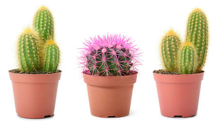 Collection of beautiful cacti isolated on white background. 版權商用圖片