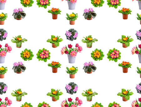 Large seamless pattern bright fresh violets and tulips isolated on white background. 版權商用圖片