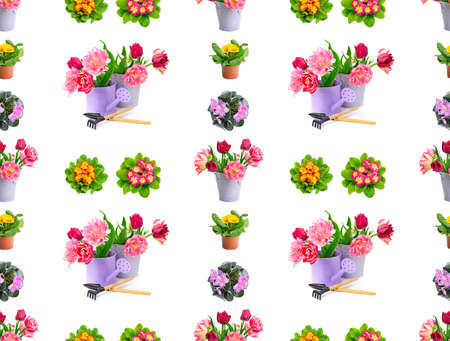 Large pattern bright violets and tulips isolated on white 版權商用圖片