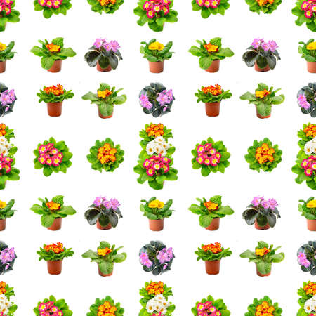 Large seamless pattern bright fresh violets isolated on white background.