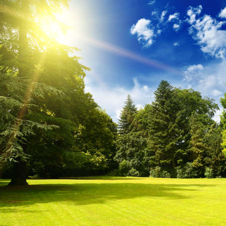 Bright summer sun over picturesque meadow in old park. 版權商用圖片