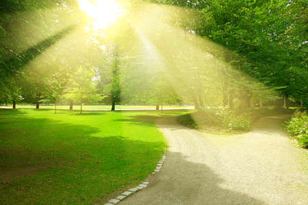 Bright yellow sunbeams in lush summer park over gravel path for walking.