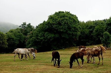 Herd of horses in a national park on Mount Daiti in Tirana 写真素材 - 134794005