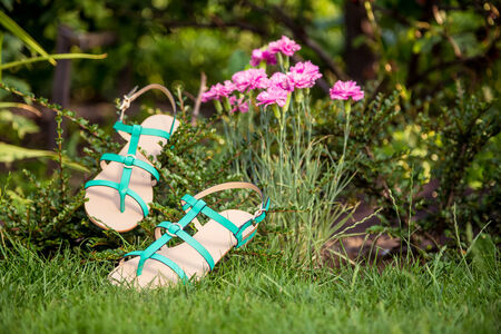 sandals hanging on a bush, womens shoes photo