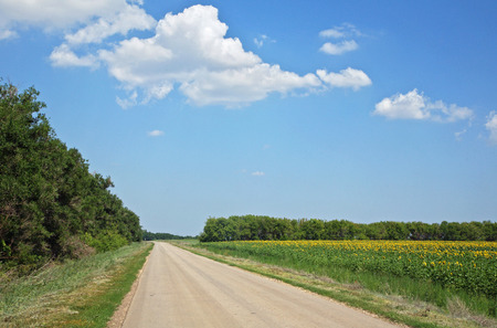 the road along the field of sunflowers Stock Photo