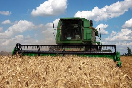 Kombinieren Ernten Weizen auf einem Feld in sonnigen Sommertag