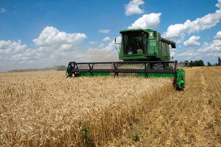 Combine harvests wheat on a field in sunny summer day photo