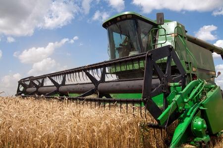 maquinaria pesada: Combine las cosechas de trigo en un campo en día soleado de verano