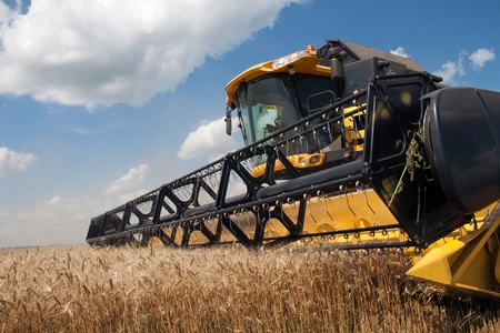 agricultural: Combine harvests wheat on a field in sunny summer day