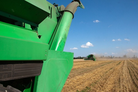 Combine harvests wheat on a field in sunny summer day Stock Photo - 13236006